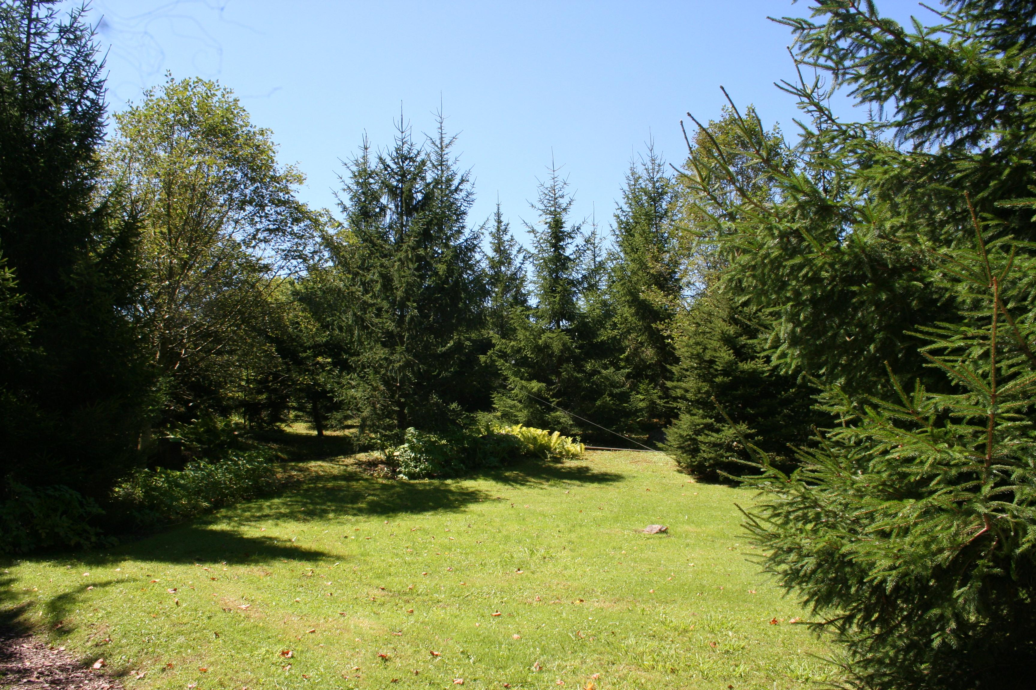 Parque buscando a chipie for Arboles para jardines pequenos
